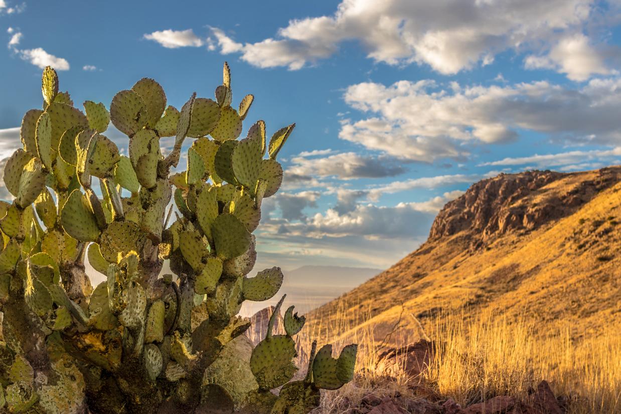 Casas Grandes landscape 2