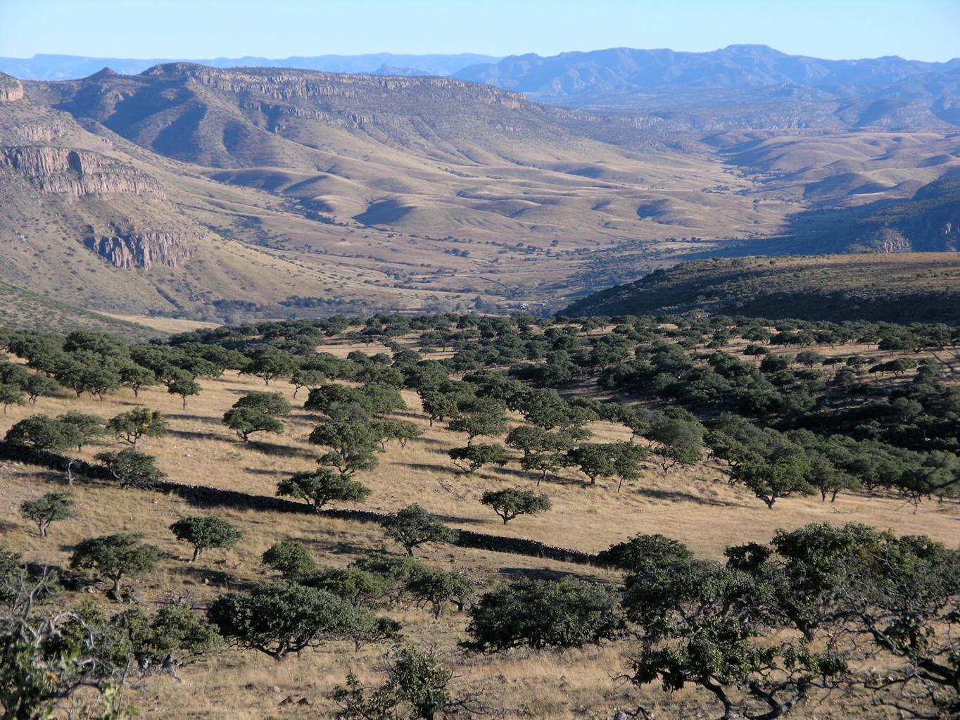 Chihuahua landscape 3